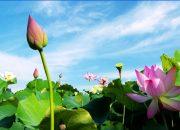 Phân tích bài thơ cảnh ngày hè của nguyễn trãi | Kênh Văn Học