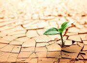 Nghị luận xã hội về sống có trách nhiệm | Làm văn mẫu